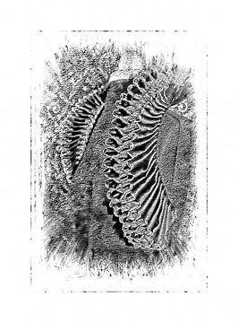 Historische kraag afgebeeld in zwart wit van Babette van den Berg