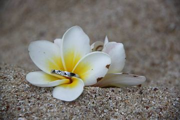 verlovingsring in bloem op het strand van