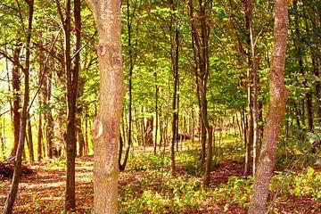 Concept nature : Walking through woods van Michael Nägele