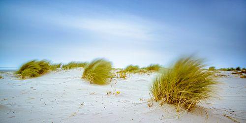 Dünegras, das in den Wind bewegt am Strand
