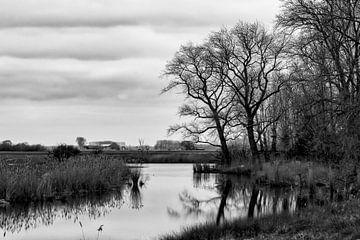 Linie oder Passageule bei Waterlandkerkje von Ellen Driesse