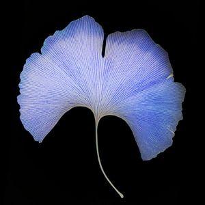 Blauwe droom van Gerda Bontsema