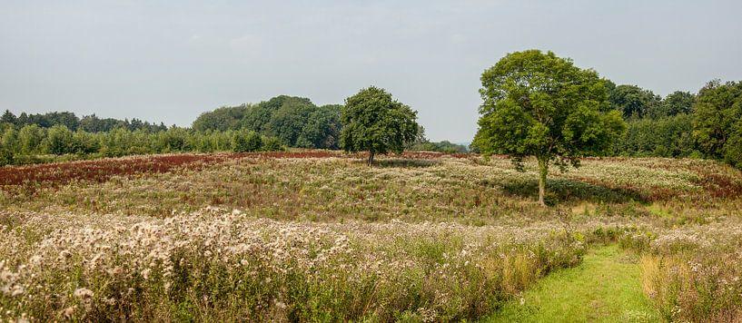 Heide landschap in Zuid - Limburg van John Kreukniet