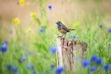 La Gorge bleue au printemps sur Caroline van der Vecht