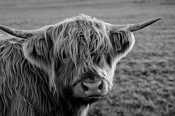 Highlander-Kuh sieht aufdringlich aus; in schwarz-weiß von Atelier Liesjes