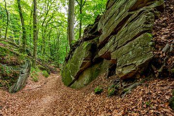 Mullerthal Trail IV