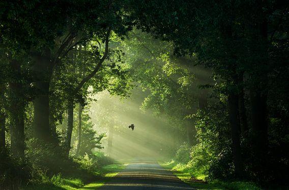 Path to the Secret Garden van Martin Podt