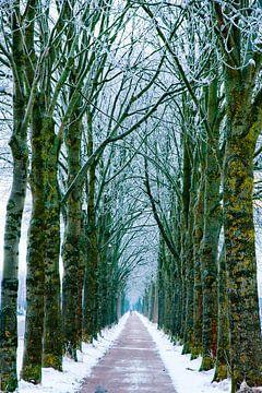The line of trees van Marc Hollenberg