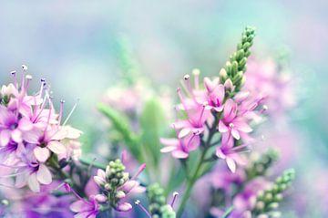 Macro - Bloemen von Angelique Brunas