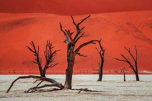 Kleuren uit de woestijn, Namibië