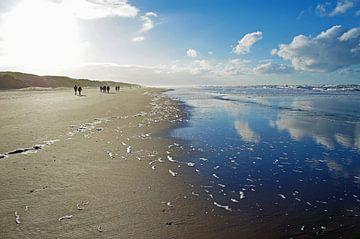 Winterse strandwandeling van