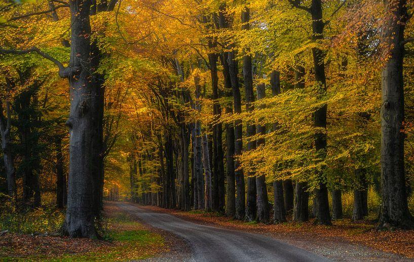 Zwarteweg, Lage Vuursche van Pascal Raymond Dorland