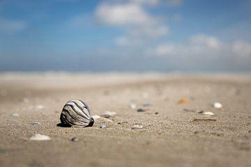 schelp foto van terschelling van Karijn | Fine art Natuur en Reis Fotografie