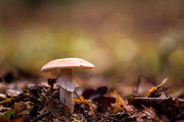 beiger Pilz zwischen den Blättern von Tania Perneel