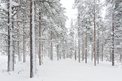 bomen in de sneeuw. lapland Finland