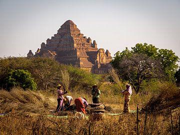 Hard werken tussen de pagodes van Rik Pijnenburg
