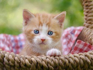 Baby-Kätzchen in einem Weidenkorb von Katho Menden