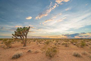 Bunte Wüste von Robert de Boer