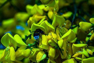 Breiter Strauch mit Blüten und Hummel von Frank Ketelaar