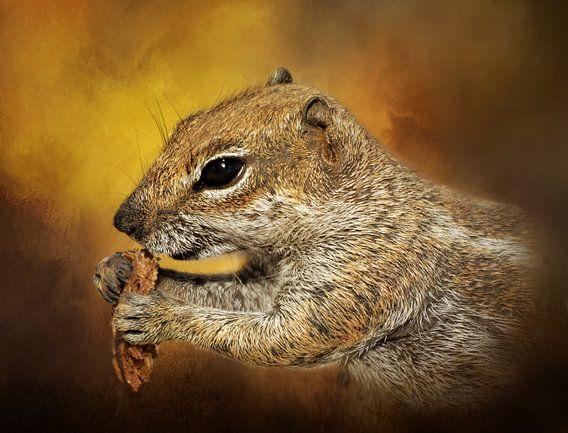 Portret Van Een Lief Eekhoorntje