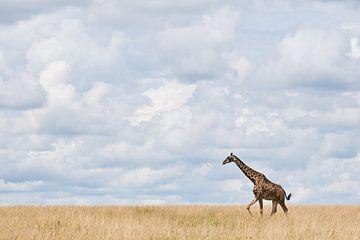Giraffe walking through tall grass in Africa sur