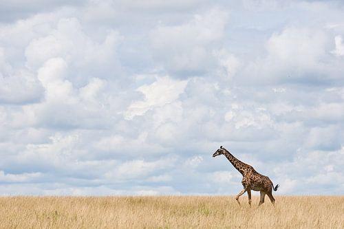 Giraffe loopt over uitgestrekte vlakte van