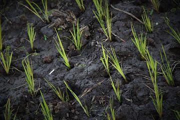 Reisen für Reis von Marije Zwart