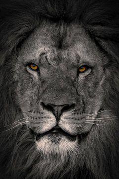 Löwen: Porträt Augen eines Löwen von Marjolein van Middelkoop