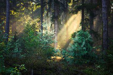 Sonnenstrahlen im Wald von Daniela Beyer