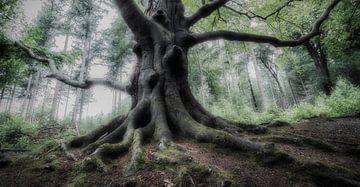 Mystischer Baum von Connie de Graaf