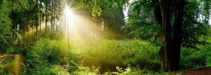 Prachtige natuur van Günter Albers