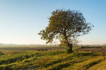 Einsamer Baum in der Morgensonne von Ruud Morijn