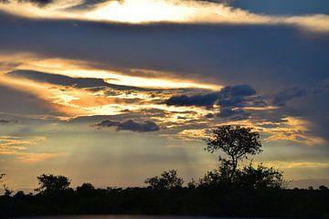 Zonsondergang in Zuid Afrika, Manyeleti Game Reserve van Rebecca Dingemanse