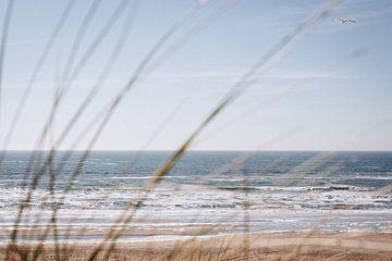 Möwe über dem Strand von Zandvoort von Evelien Lodewijks