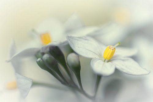 Fading flowers... (bloem, lente, geel) van Bob Daalder