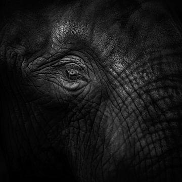 Oud oog olifant von Ruud Peters