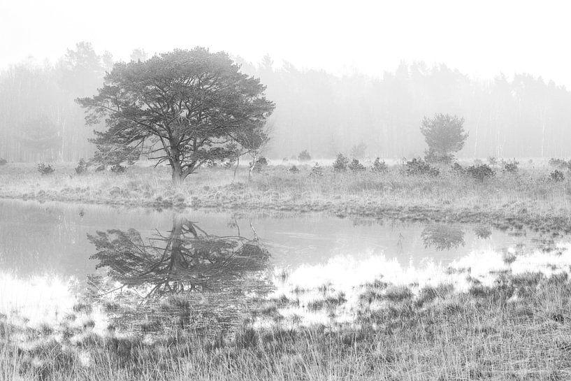 Hasselsvennen Leenderbos schwarz und weiß von GoWildGoNaturepictures