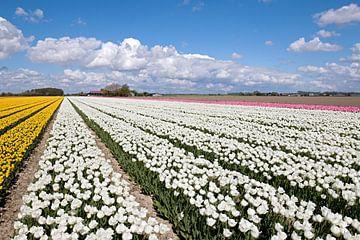 Kleurrijk tulpenveld von W J Kok