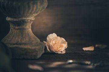 Die letzte Rosenblüte von Regina Steudte | photoGina