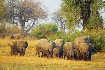 Olifant familie in Botswana van Marieke Funke