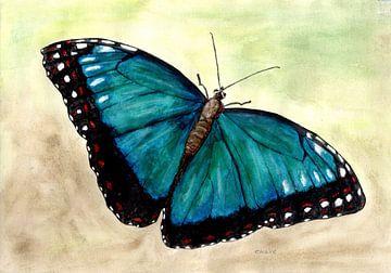 Vlinder van Sandra Steinke