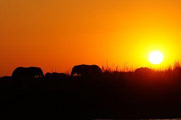 Olifanten in Chobe bij zonsondergang van Erna Haarsma-Hoogterp