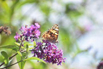 Schmetterling von Emily Yilmaz
