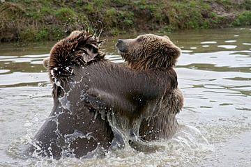 spelende bruine beren von gea strucks