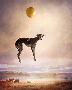 Ballon vlucht