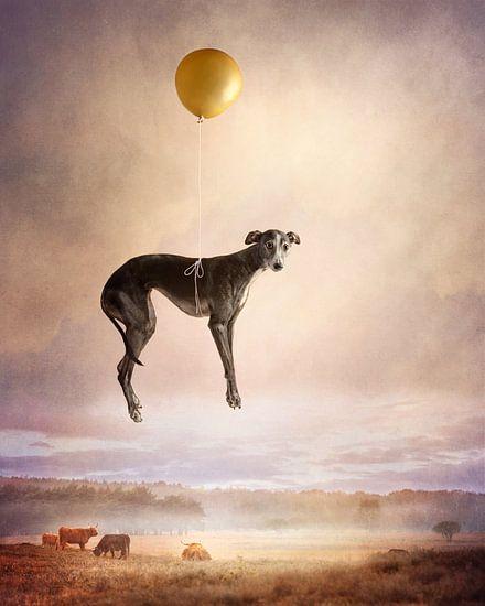 Ballon vlucht van Nuelle Flipse