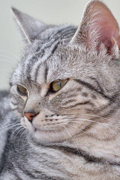 portret van een kat van eric van der eijk