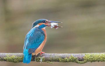 IJsvogel heeft een vis van Ans Bastiaanssen