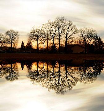 Bäume Reflexion von Corinne Welp