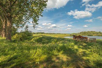 Paarden in Hollands landschap van Moetwil en van Dijk - Fotografie